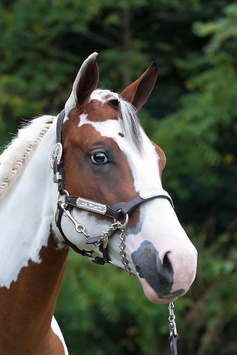 558 best Horse head ph...
