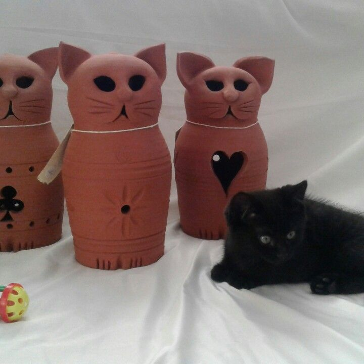 Terracotta cats by Frank Hakkaart West melton pottery  Cat model - Archie