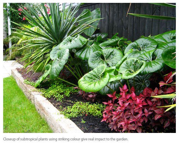 subtropical garden design - Google Search More