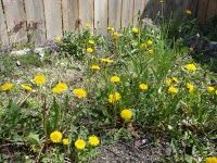 17 Best 1000 images about weeds on Pinterest Gardens Raised beds and