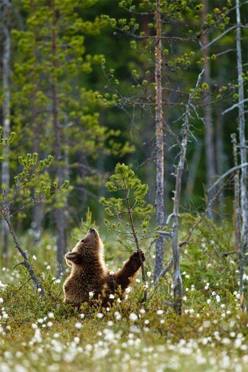 "Bear: ""Decision-Making..."""
