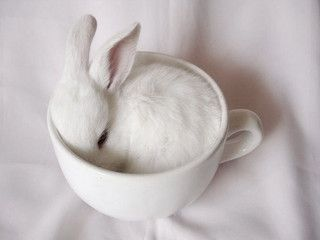 Milky bunny by floweryway, via Flickr | White - Rabbit - Photography