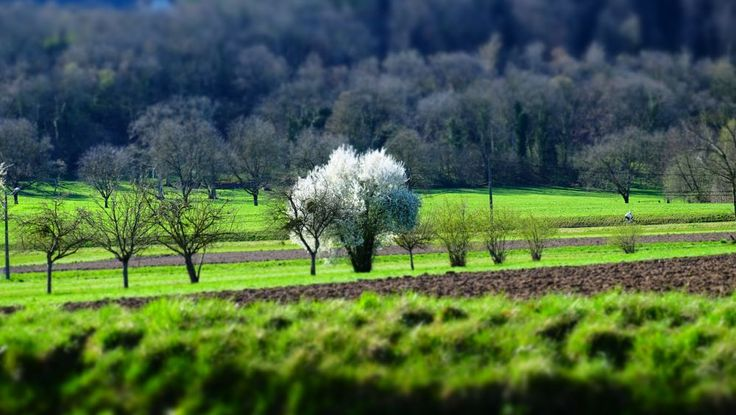 Springtime  by christophepoidevin
