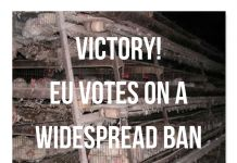 Animal Rights Victory!- EU Votes On A Widespread BAN Of Battery Cages