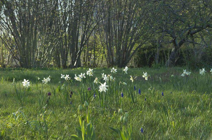 Springgarden, photo Sophia Callmer