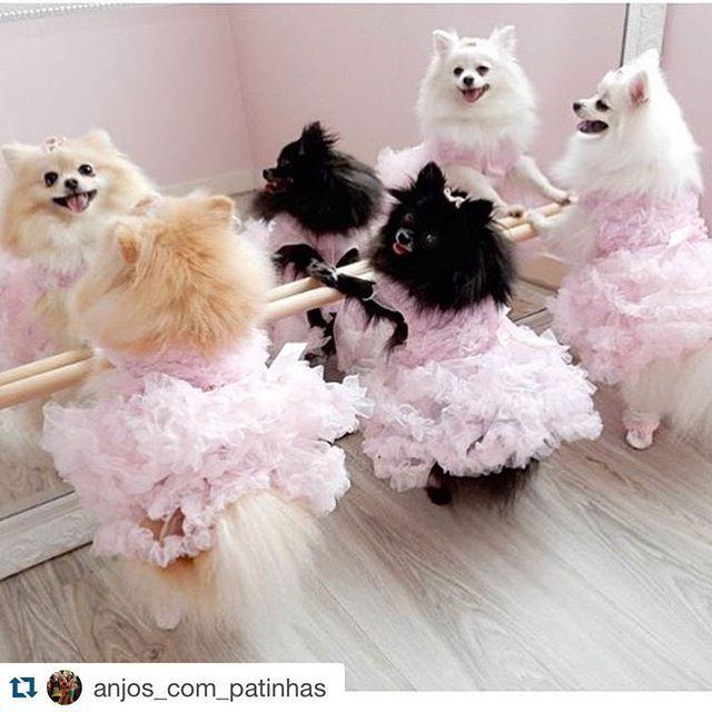 Foto inspiração do dia: quem exagera no final de semana compensa depois! Lindas! ❤️ #Repost @anjos_com_patinhas with @repostapp. ・・・ PORQUE HOJE É DIA DE AULA DE BALLET DAS NOSSAS PRINCESS!!!!