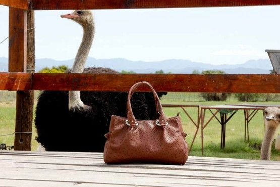 At Safari Ostrich Farm We Only Use High Quality Leather