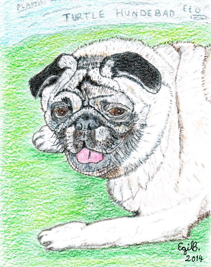 "Fargeblyant-tegning av mopsen Dave ! Dave the pug ! / Colorpencils"""