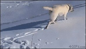 21 Best GIFs Of All Time Of The Week #166 from best GOAT and Best of the Web