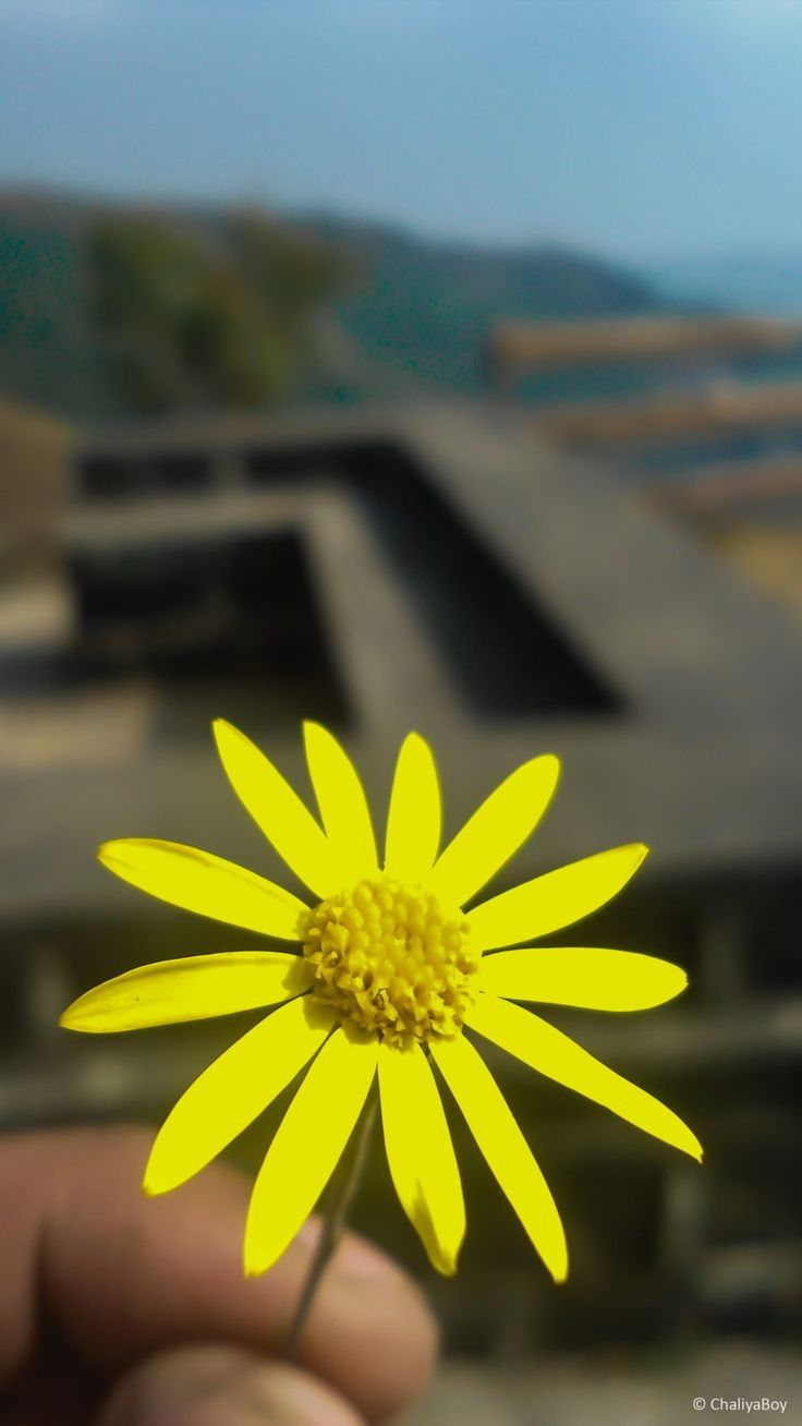 Yellow Flower 4k Ultra Hd Mobile Wallpaper Flower Photography