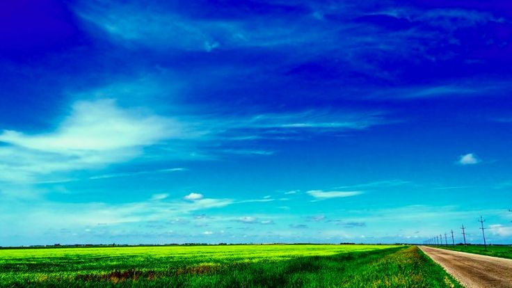 Canola Road in Eastern Manitoba