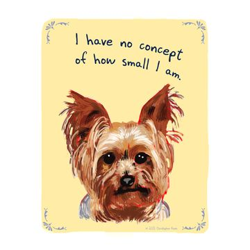Truth lol: Small Dogs, Yorkie, Pet, So True, Tiny Confessions, Things, Yorkshire Terriers, Big Dogs, Animal