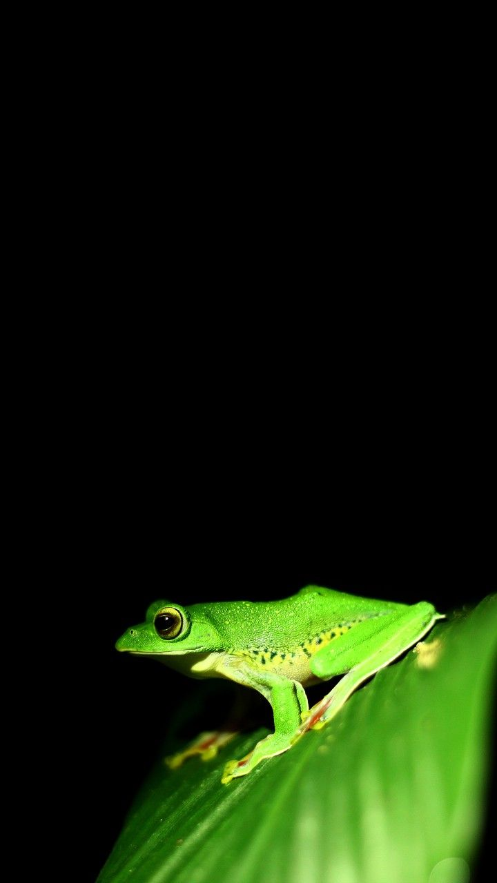 Frog Wallpaper Frog Wallpaper Wallpaper Edge Animal Wallpaper