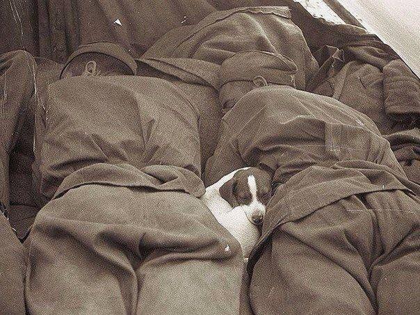 Русские солдаты спят с щенком.