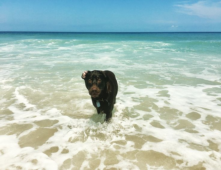 Now through Monday we are letting dogs book for free! No dog fee on 2018 Outer Banks rental reservations. #outerbanks #dogs #beach #deal #discount #obx