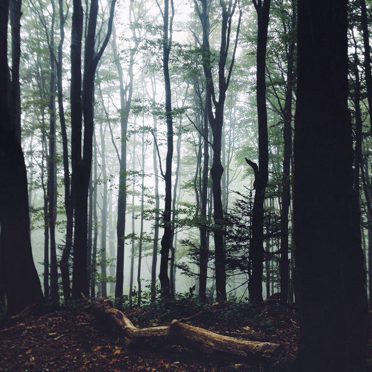 Bieszczady, misty forest, autumn 2015, Poland