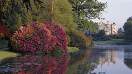 Rhododendrons reflected in the Top lake on an early morning at Sheffield Park.