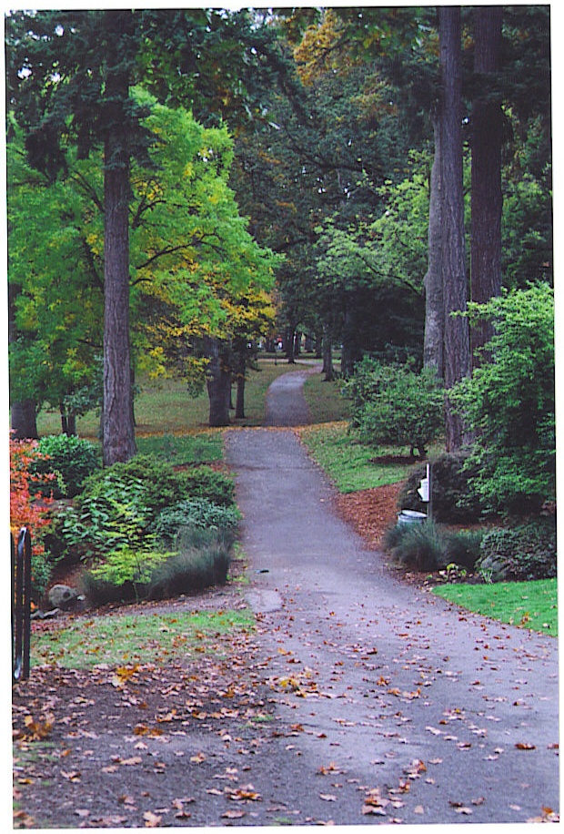 Fall in Bush Park Salem Oregon. Great place right in town.