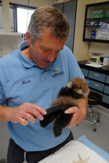 tiny sea otter pup.   Lucky man!!! Wish that we're meeee!