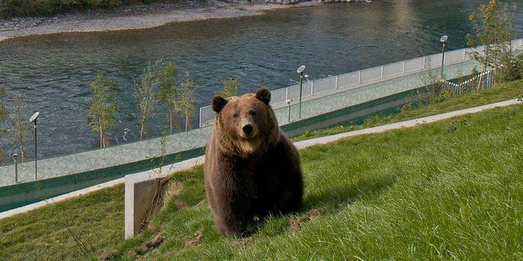 Parque de los osos - Bern Tourismus
