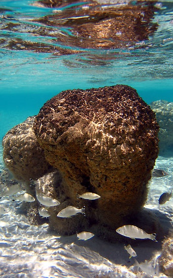 """Stromatolites in Hamelin Pool"" Shark Bay, Western Australia"