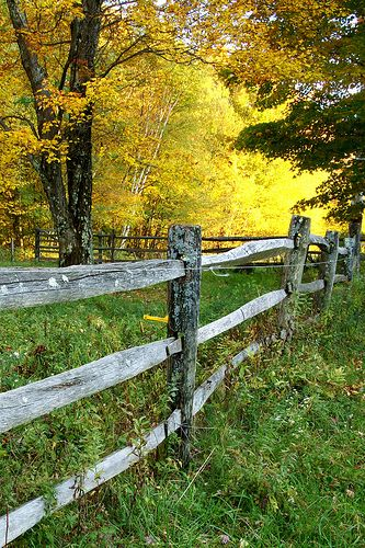 Lovely how just an image of a fall wood fence can lift your mood. Seeing seasons change can do that.