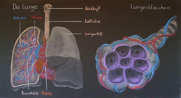 Waldorf ~ ? grade ~ high school ~ Physiology ~ chalkboard drawing