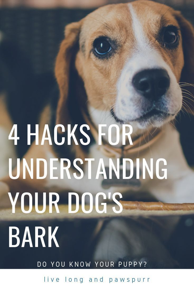 How To Understand Why Your Dog Barks Dog Barking Dog Care Dogs