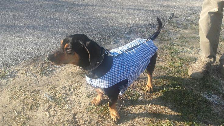 Dog clothes. Diy