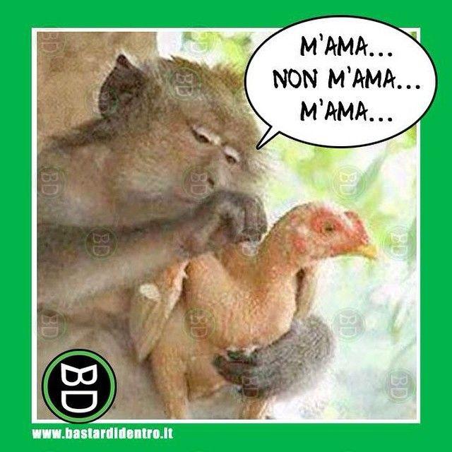 Il #primate innamorato #bastardidentro #gallina #ipnoticamentebastardidentro www.bastardidentro.it