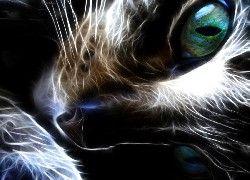 Kot, Oczy, Pyszczek, Fraktal