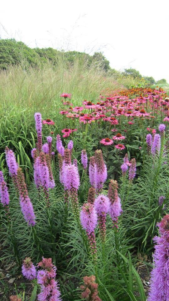 http://urbanfloranl.wordpress.com/2014/08/13/sussex-prairie-garden-american-meadows-in-britain/
