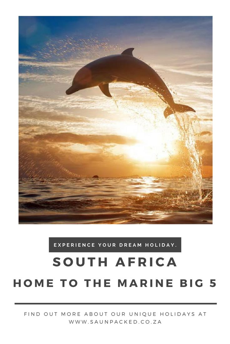 The Marine Big 5 has become a runaway success for everyone who enjoys the sea and wants to experience these incredible creatures close up.