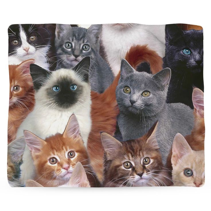 This blanket is for all the cat ladies and gentlemen out there. Impress all your friends with even more cats in your house! Blanket Details: - Printed in USA! - Poly Fleece Plush Material - Custom Pri
