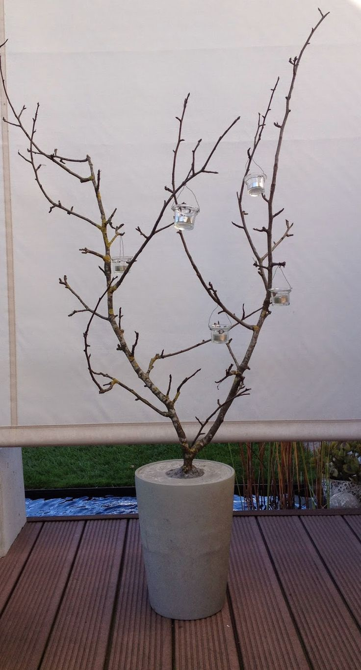 Wohnbrise: lichterbaum