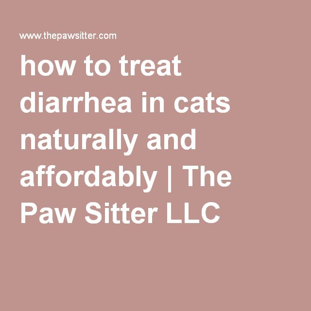 how to treat diarrhea in cats naturally and affordably | The Paw Sitter LLC