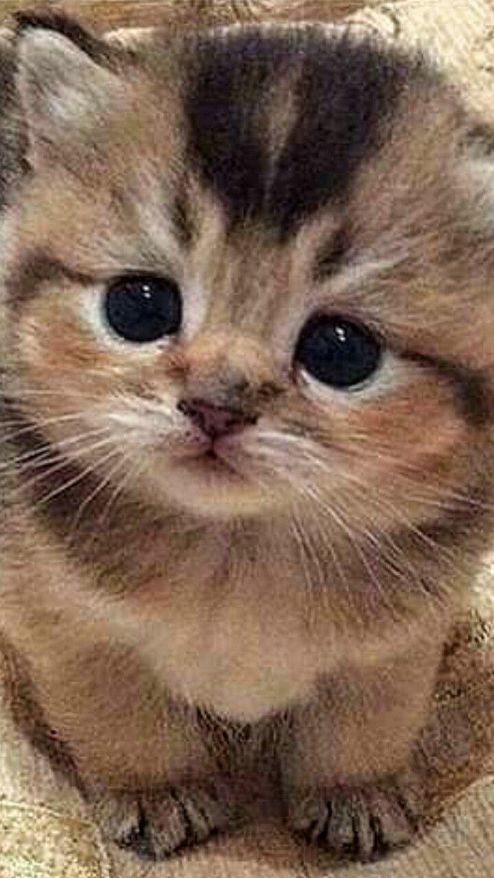 Pin By Olga Ermakova On Smeshnye Kotyata In 2020 Cute Baby Animals Cute Animals Kittens Cutest