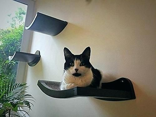Image Result For Bedroom With Cat Shelves Cat Bed Siberian Cats For Sale Cat Shelves