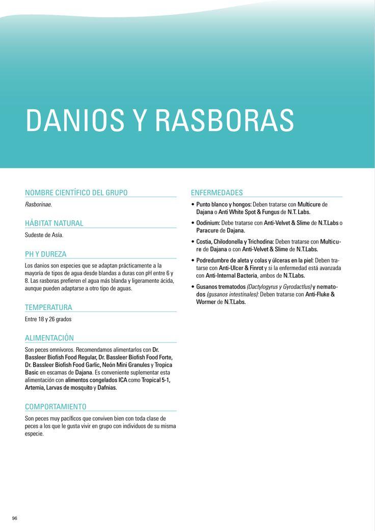 DANIOS Y RASBORAS - HobbyZoo Rosaleda