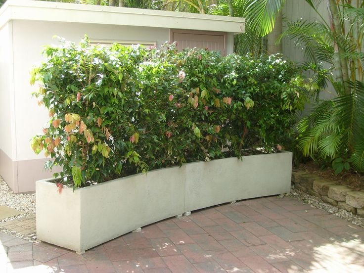 hedge planter boxes 3