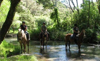 Kawerau Activities - Tui Glen Horse Treks, Bay of Plenty, New Zealand