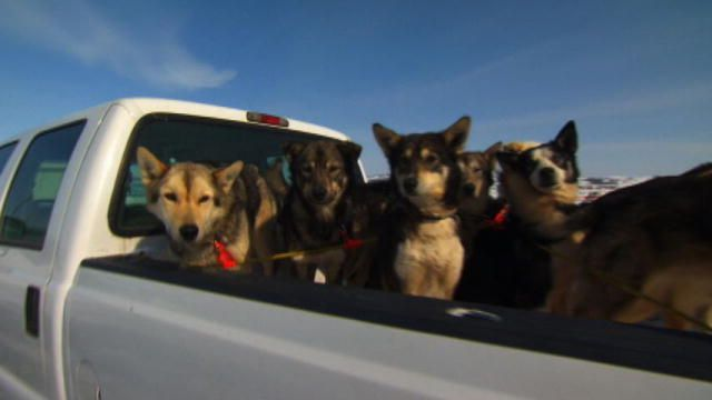 The Iditarod is the super bowl of Alaska and the contestants depend on Era Alaska's flying services to transport dogs, food, and much more.