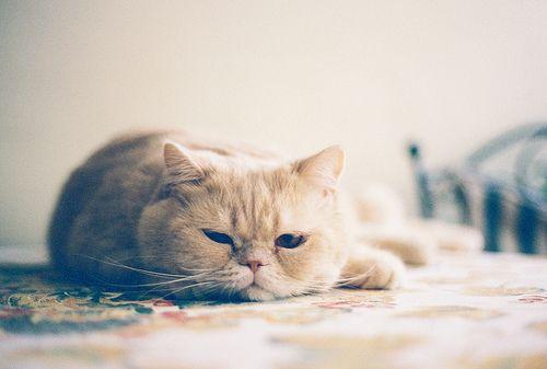 ぼんやり: Cats Cats, Face, Kitty Cats, Pets, Camera, Feline, Animals Photos, Cat Lady