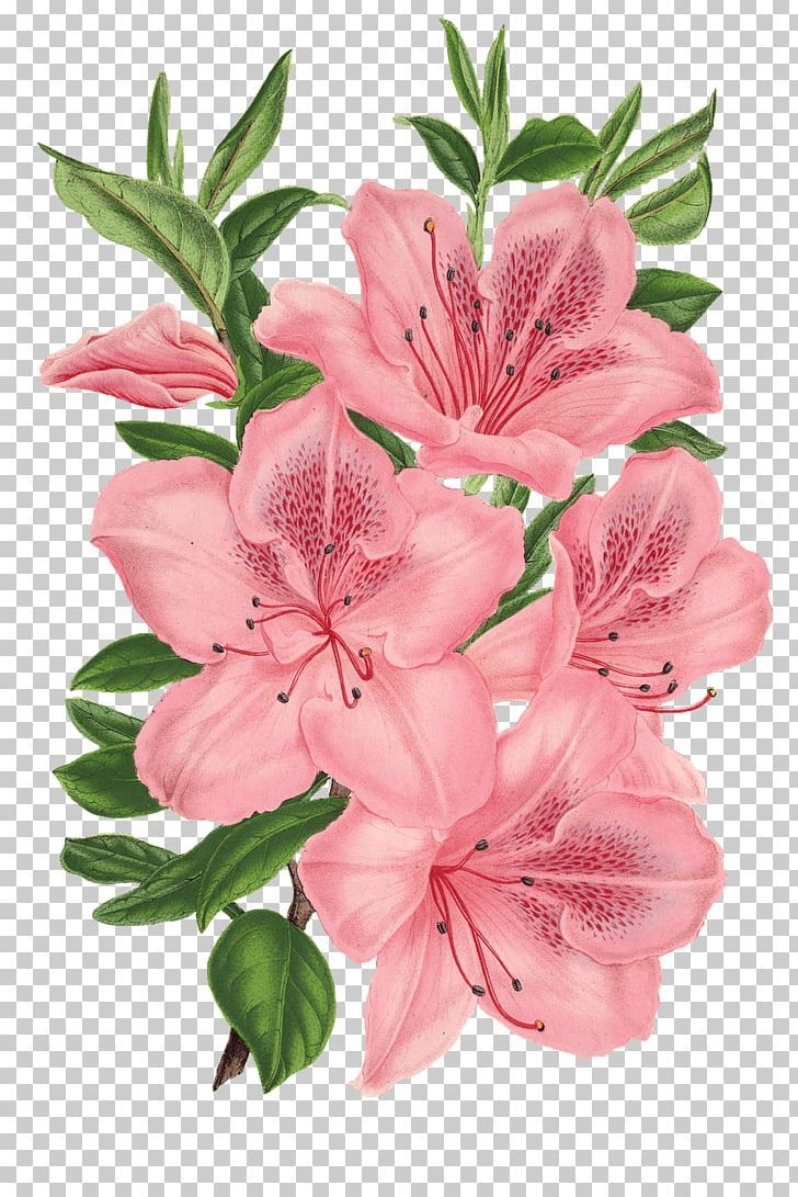 Pink Flower Drawing Png Flower Drawing Hibiscus Flower Drawing Flower Drawing Tumblr