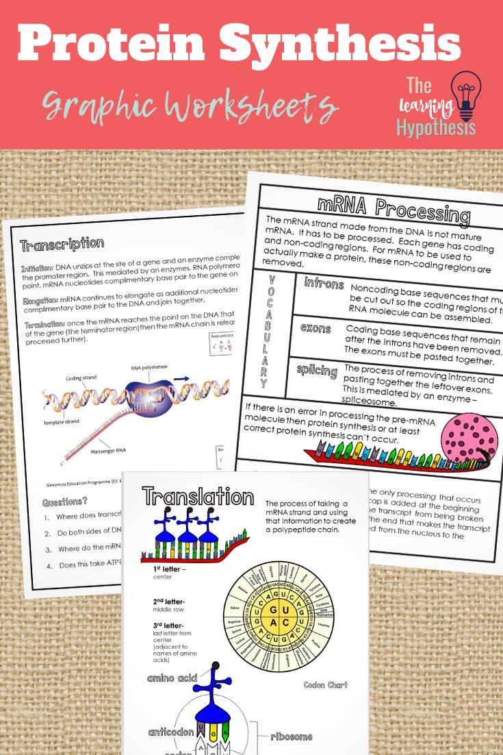 Protein Synthesis Worksheet. Graphic Notes Protein