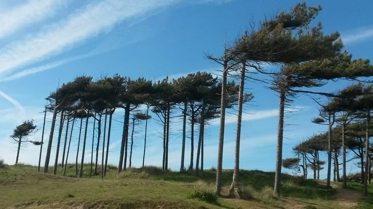 windswept formby beach. liverpool