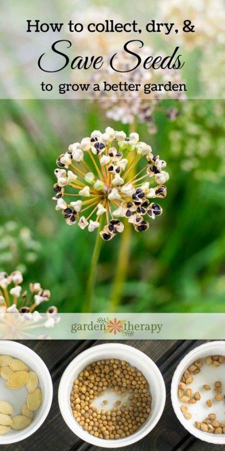 Garden Seed