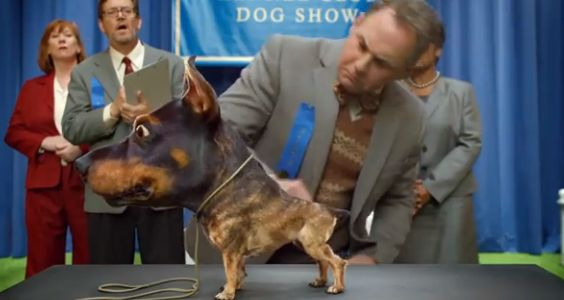 The Only Super Bowl Commercials Worth Watching (according to BuzzFeed), 2014; It's the Doberhuahua!