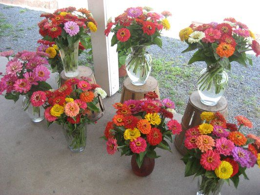 Zinnia bouquets! Just so simple and pretty, some rafia around a large mason jar and boom a splash of color.