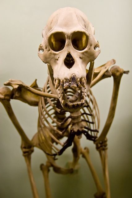 17 Best images about SKULLS AND BONES. OSTEOLOGY on ...